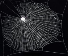 To picture Coherentism, try thinking about a spider's web.